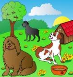 hundar arbeta i trädgården siesta Arkivbilder