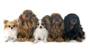 hundar fem arkivfoton