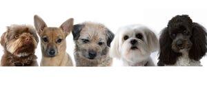 hundar grupperar litet royaltyfria foton
