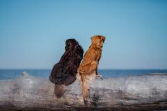 hundar loan två arkivfoto