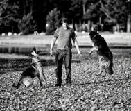 hundar man att leka Royaltyfri Foto