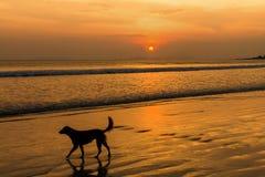 Hundar på stranden royaltyfri bild