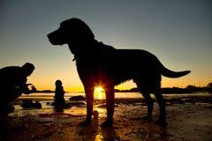 Hundar på stranden Royaltyfria Foton