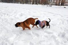 hundar som leker snow två Royaltyfri Bild
