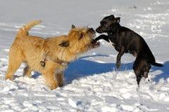 hundar som leker två royaltyfri fotografi