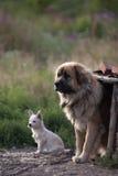hundar som squatting Fotografering för Bildbyråer