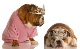 hundar spolierade två Arkivbilder