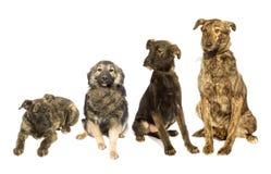 hundar ställde in royaltyfria bilder