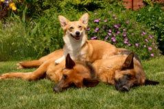 hundar tre arkivfoto