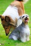 hundar två arkivbilder