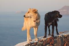 hundar två Royaltyfri Fotografi