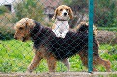 hundar två Arkivfoto