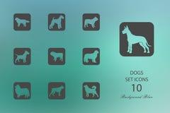 hundar Uppsättning av plana symboler på suddig bakgrund vektor illustrationer
