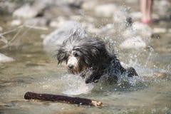 Hundattackpinne i vatten royaltyfria foton