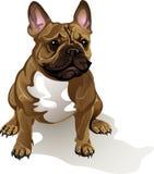 Hundavel för fransk bulldogg Stock Illustrationer