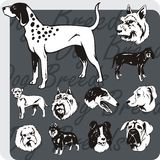 Hundavel - vektoruppsättning Fotografering för Bildbyråer