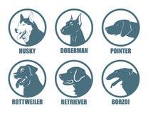 Hundaveletiketter Arkivbild