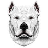 Hundavelhuvudet skissar vektorn Arkivfoto