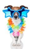 hundbög Royaltyfri Bild