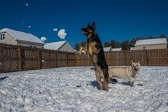 Hundbanhoppning i snön arkivbild