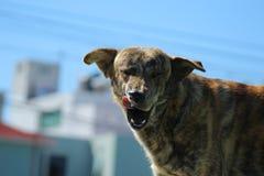 Hundblinkning Arkivbilder