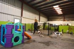 Hunddaycare Arkivfoton