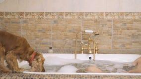 Hunddrinkvatten från bad arkivfilmer
