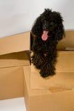 Hundeüberraschung im Kasten Stockfoto