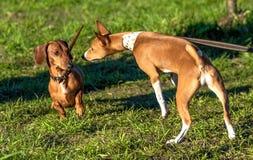 Hundeüberraschung und -vorsicht beim Treffen stockfotografie