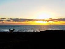 Hundeüberwachender Sonnenuntergang Lizenzfreie Stockfotografie