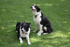 Hunde Lizenzfreie Stockfotos