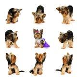 Hunde Lizenzfreies Stockfoto