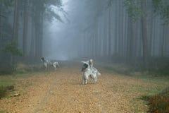 Hunde Lizenzfreie Stockfotografie