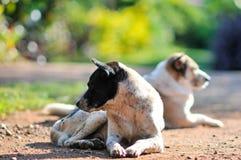 hunde Lizenzfreie Stockbilder