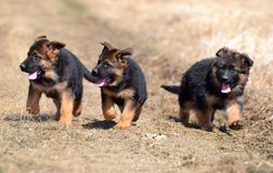 Hunde 00013 Stockbilder