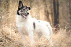 hunde Stockfotografie