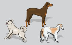 hunde vektor abbildung