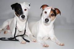 Hunde als Doktor und Patient stockfotografie