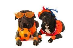 Hunde als niederländische Fußballanhänger Stockbild