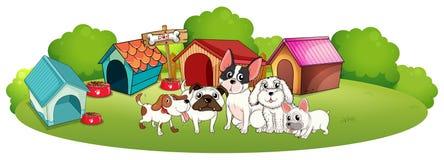 Hunde außerhalb ihrer Häuser Stockbilder