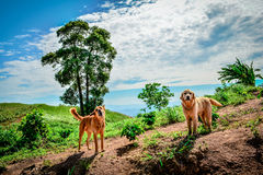 2 Hunde auf Berg Stockfoto