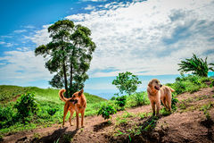 2 Hunde auf Berg Lizenzfreies Stockfoto