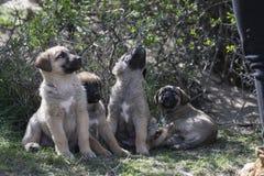 Hunde auf dem Gras Stockfotografie