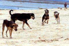 Hunde auf dem Strand Lizenzfreies Stockfoto
