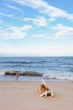 Hunde auf dem Strand Lizenzfreie Stockbilder