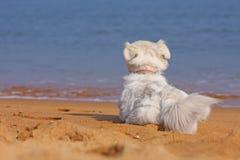Hunde auf dem Strand Lizenzfreie Stockfotografie