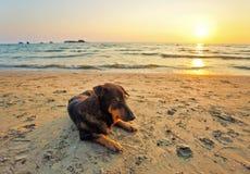 Hunde auf dem Strand bei Sonnenuntergang Lizenzfreies Stockfoto