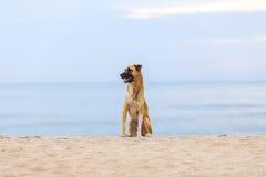 Hunde auf dem Strand morgens Stockbild