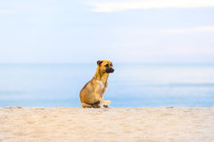 Hunde auf dem Strand morgens Lizenzfreie Stockfotografie