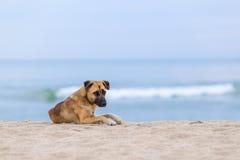 Hunde auf dem Strand morgens Stockfotos